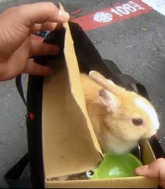 變魔術?警查緝女毒販包包竟露出兔頭