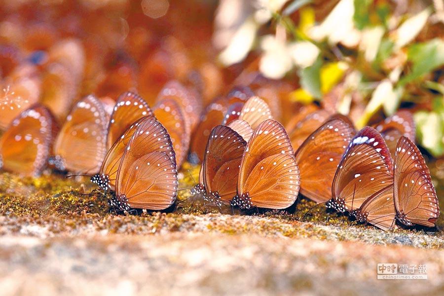 天氣入秋,除了到六龜泡湯、茂林賞蝶,還有現在最夯的露營、野餐都是遊客到六龜玩的好選擇。(茂管處提供)