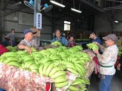 香蕉過剩 中油百油站明助賣3萬公斤
