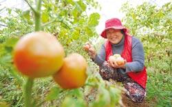 徐州賈汪產業生態化 化為發展優勢