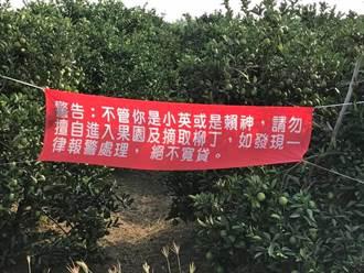 防竊賊偷柳丁 農民掛紅布條扯小英、賴神