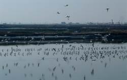 賞鳥天堂!水林塭底溼地生態豐富 野生鳥類達150餘種