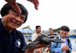小玳瑁迷航落難綠島 後送至海生館