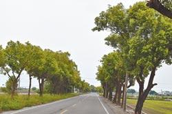 路樹剪過頭 綠色隧道再等等
