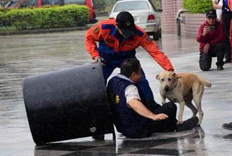 搜救犬神演練 雨中狂奔救議員