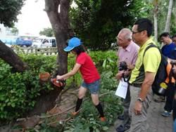 樹木修剪當吉時 屏東林務局辦護樹宣導