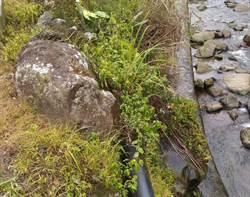 環保團體:除草劑潛藏危機 呼籲別再亂噴