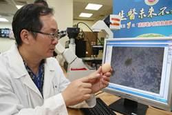 畜試所建立台灣首株雞多能性幹細胞 可保珍貴種源