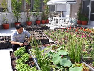 美化兼綠能 仁德區公所把屋頂變空中花園
