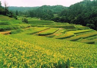 走讀日本森川里海 自然環境再生  找回和諧共榮的永續生態