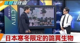 《新聞龍捲風》日本寒冬限定的詭異生物 現身原因竟是...