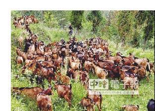 巴中綠色發展 打造森林康養地