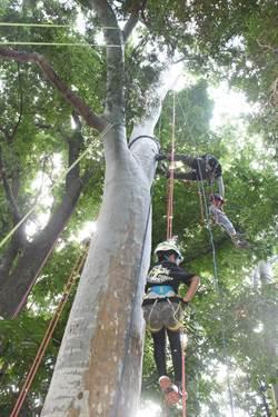 有樹不能爬 集集學童繩攀體驗