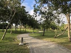 抗空汙!都會公園條件佳 台中交易量減少近3成