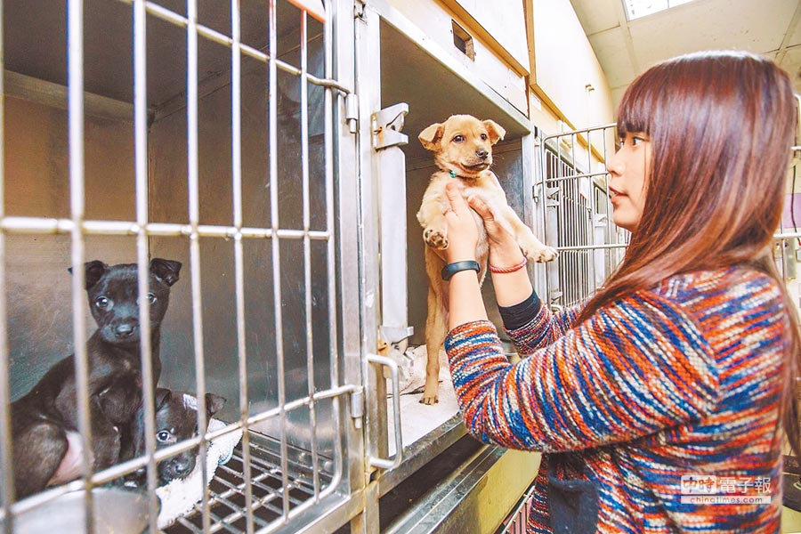 市議員陳孋輝發現,柯上任以來,動物遭人道處置數量攀升。圖為台北市流浪動物之家所收容的動物。(本報資料照片)