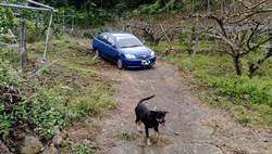 翁車受困山區 靈犬搖尾引導警尋車