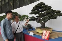 科博館展盆景植物特展 展現方寸間的花木藝術