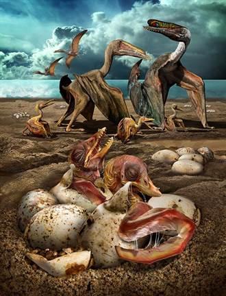 破紀錄!數百翼龍蛋化石新疆出土 首現立體胚胎