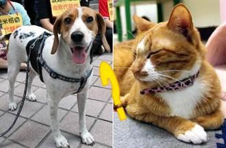 狗還是貓比較聰明?科學家這麼說