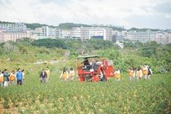 機械化解決缺工 吸引青農觀摩