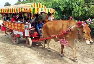 剖甘蔗、坐牛車 萬丹采風甘蔗祭重現農村生活
