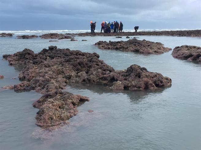 張景森等人親自視察大潭藻礁。(圖/桃園在地聯盟提供)