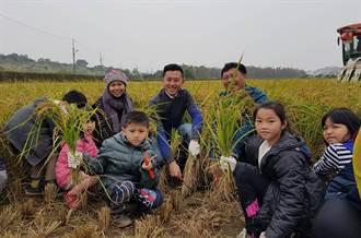 竹市食農教育夯 南隘國小師生收割珍隘米