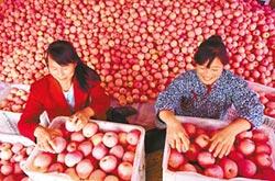 全球首個蘋果期貨 登陸鄭商所