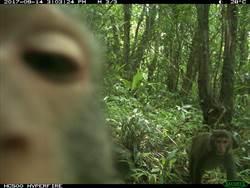 國家森林遊樂區上演實境秀 結果牠最搶鏡