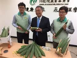 高雄農改場打造新品種「愛戀絲瓜」 無臭青味可生食