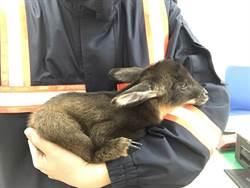 警搶救國寶山羊寶寶功虧一簣 送特生作教育用途