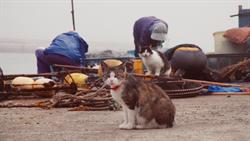 超療癒日本貓島 貓奴必看《幸福貓島日記》