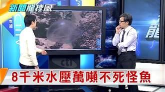 《新聞龍捲風》8千米深海怪 面對1600頭大象壓身不碎身暴亡!