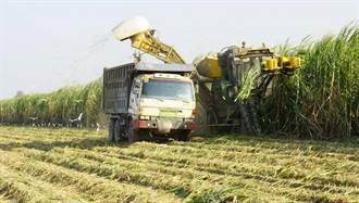 種原料甘蔗比種稻收入多國內缺糖正是種植好時機