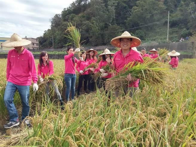 豐穀建設從老闆到員工,一起參與福田農場的插秧、收割過程,感受汗滴禾下土與收穫的喜悅。(盧金足攝)