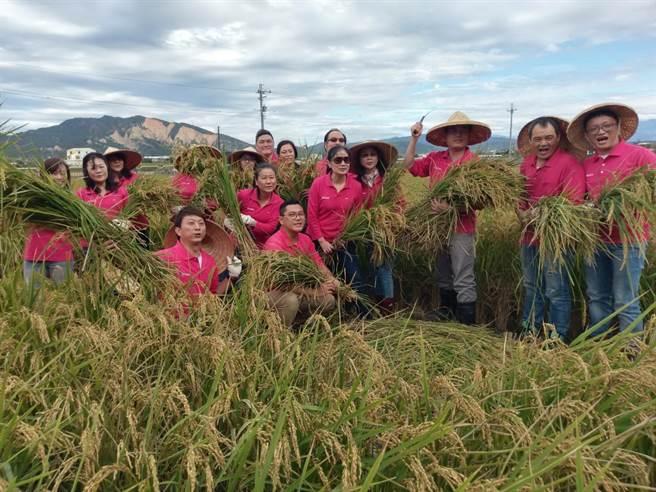 豐穀建設將福田農場收穫的稻米,多數收成捐助弱勢團體及公益單位,以實質行動回饋社會。(盧金足攝)