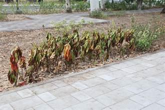 管理不當 平實營區數百株植栽活活枯死