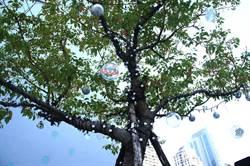 挺環保!陸府藝角許願球活動捐助反空汙團體