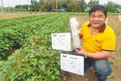 生物防治除蟲 水林番薯讚