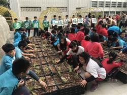 屋頂綠美化可降溫 台南市從學校帶頭做起