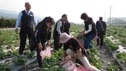 二水農會八堡圳農情館 消費200送「拔蘿蔔」