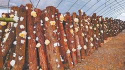 發展優質農產品 巴中扶貧金鑰匙