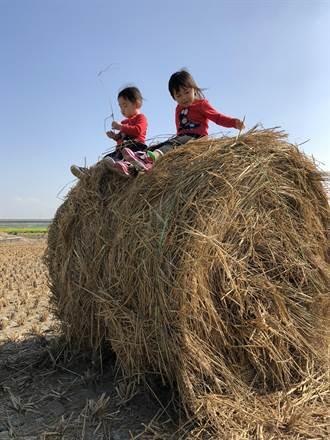 六百甲稻草做成稻草捲 雲林農田新景觀