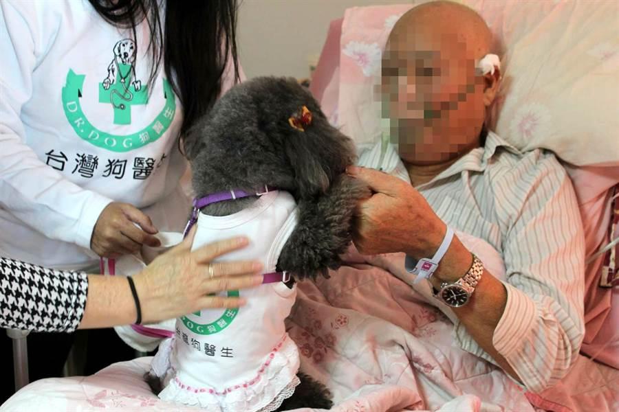 狗醫生到醫院安寧病房探訪病人。(呂素麗翻攝)