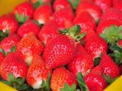 草莓紅了!美人湯加上嬌豔鮮果超幸福