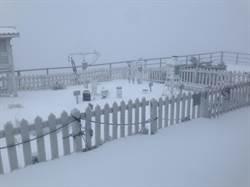 玉山成銀白世界!積雪最深4.2公分
