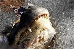 炸彈氣旋狂虐北美 結冰河面驚見「鱷魚凍」