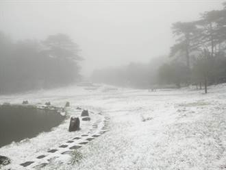 積雪達10公分!福壽山農場急凍 一夜變北國世界