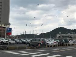 增添基隆「國門」方便性 港西3碼頭增設停車場