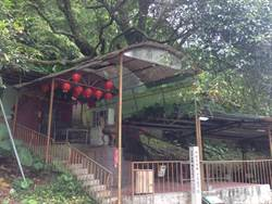 新店九丁榕守護居民 被供奉為「樹醫公」